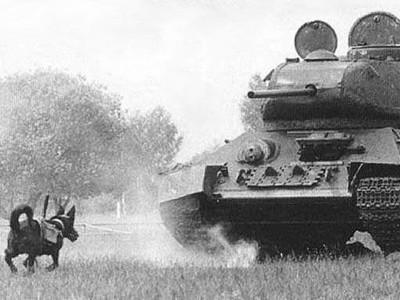 二戰「反坦克犬」綁炸彈自殺攻擊 可是狗狗..會跑向主人啊