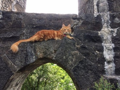家貓愛鬧失蹤!鏟屎官幫牠加掛GPS,天天查定位接喵皇回家