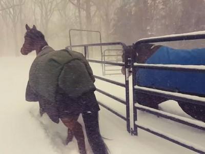 他的馬雪特大!下雪放風冷到爆,馬兒神同步轉頭衝回家