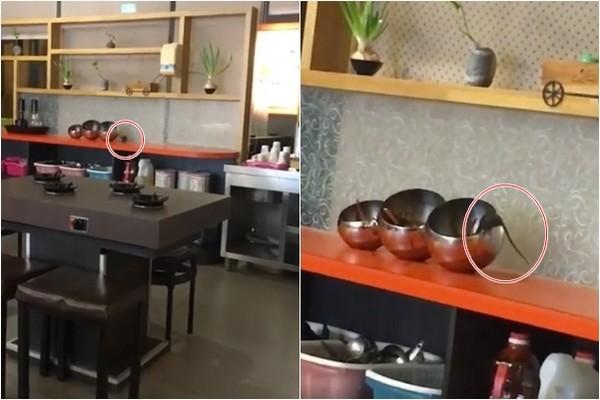 ▲▼火鍋店老鼠狂吃沙茶醬。(圖/翻攝爆料公社)