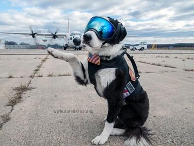 機場英雄犬離世了!一生驅逐8千隻鳥 最後一天仍在跑道工作
