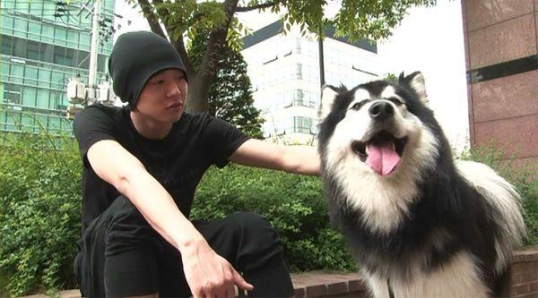 ▲朴有天愛犬哈郎。(圖/翻攝自韓網)