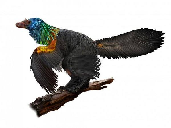 ▲插畫筆下的的新發現恐龍:「彩虹巨嵴」。(圖/翻攝自《獨立報》)