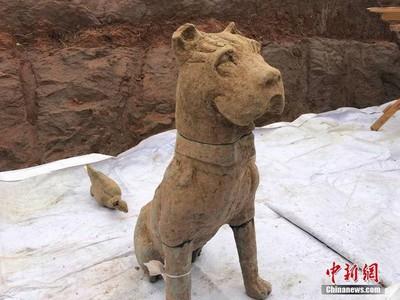 成都挖出大型崖墓群 東漢陶狗超像鬥牛犬