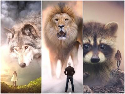 攝影師把動物全部巨大化!告訴人類不要把自己想的太偉大