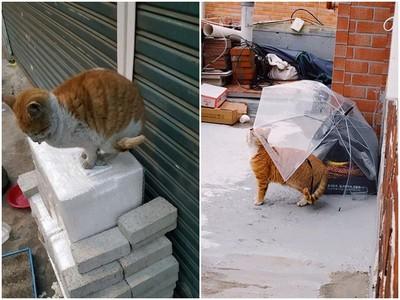 四團肉球擠一個暖暖包 寵物店改造羽絨衣讓浪貓活過-16度嚴冬