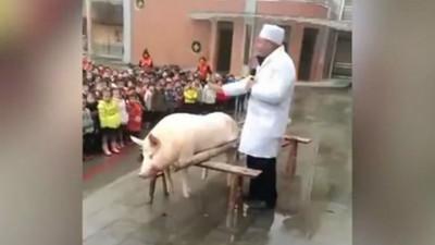 600幼稚園生目睹「現殺豬公」掏內臟 老師:這才叫基礎教育