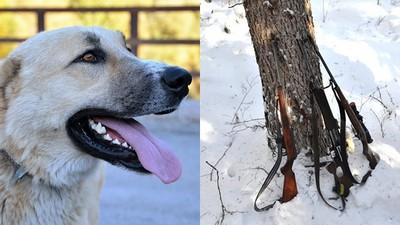 「我家狗狗開槍射我!」俄男上膛獵槍 汪星人興奮一撲..勾中板機