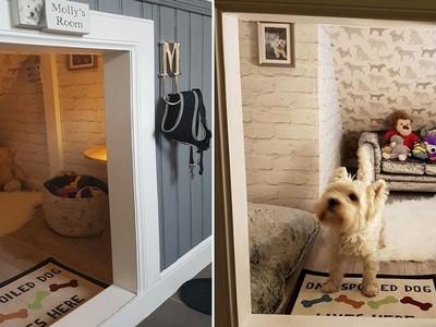小孩出生第一件事 讓愛犬搬進家門!毛爸為毛孩蓋五星級室內窩