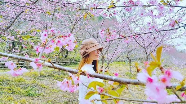▲▼高雄藤枝櫻花公園櫻花開了。(圖/IG@lineva0615提供,請勿隨意翻拍,以免侵權。)