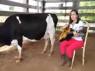 聽音樂就噴了!美女吉他一撥→乳牛產奶狂漏不停
