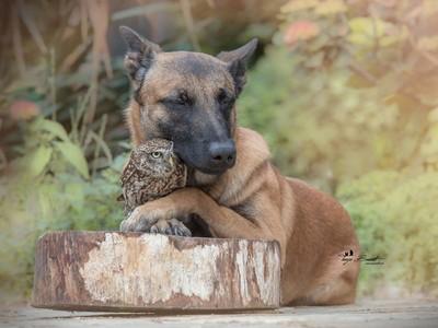 狗狗遇到貓頭鷹,膩成「最暖動物朋友」♥