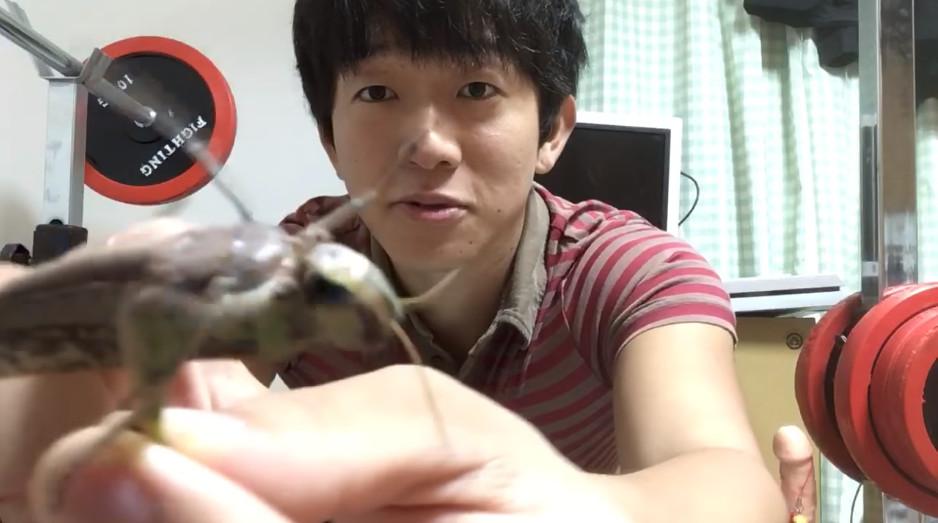 ▲網紅Mahiru Mitchell拍攝「生吃」蝗蟲的影片。(圖/翻攝自YouTube/Mahiru Mitchell)