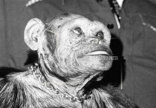▲▼黑猩猩奧利佛(oliver the chimpanzee)曾被懷疑是人類與猩猩混種,DNA證明他不帶有人類基因。(圖/達志影像/美聯社)