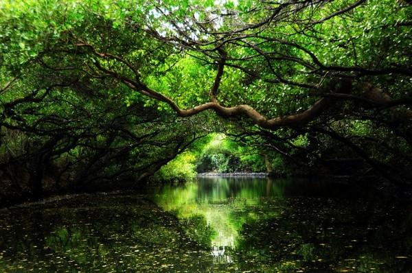 ▲台南-四草綠色隧道。(圖/攝影者:【丹尼斯®】, Flickr CC License)