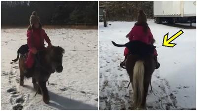 小蘿莉騎迷你馬雪地狂奔,馬背上有坨「黑影」也來參一腳