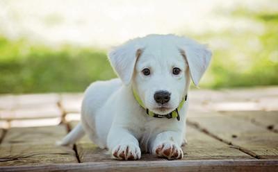 明年英國寵物店禁售6個月以下貓狗