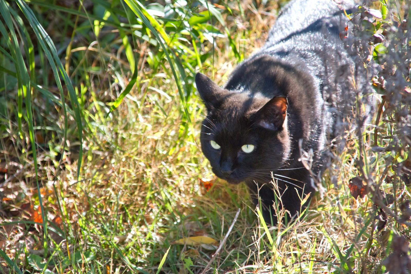 ▲▼黑貓。(圖/免費圖庫paskutaso)