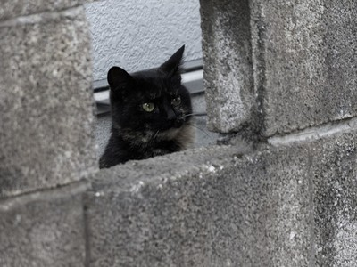 收容所爆黑貓真的沒人要 殘忍原因:牠們不上相「不能放IG」