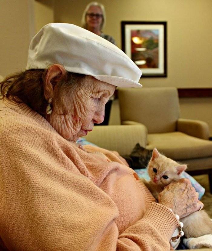 ▲▼安養院跟收容所合作,讓老人們照顧新生小貓(圖/翻攝自Pueeworld)