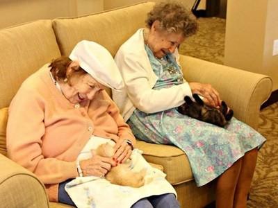 最萌失智症復康計畫!安養院抱來2隻小浪喵 所有爺奶都是保母