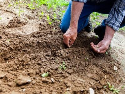 你死後7種「埋屍方法」,液態氮凍成粉末堆肥最環保