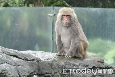 首次放長假!台北動物園休園10天