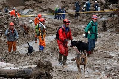救災現場的四腳英雄 搜救犬肉球受傷踩出一路血跡仍堅持救援