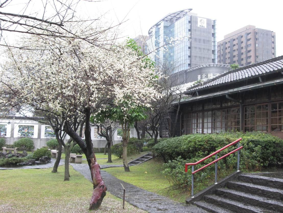 ▲▼逸仙公園梅花(圖/台北市政府提供)