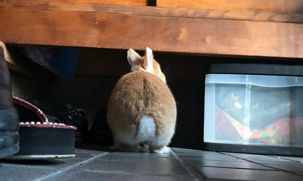 ▲▼兔兔吃菜菜(圖/翻攝自Twitter)
