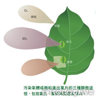 ▲植物對抗空汙不只調節二氧化碳濃度 枝葉還能阻擋塵埃降風速。(圖/記者謝侑霖翻攝)