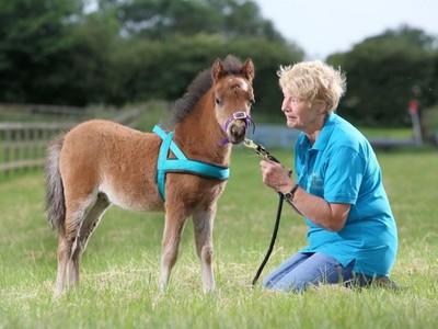 「導盲馬」拯救怕狗的她 迷你馬跟狗一樣大 踏踏馬蹄提醒別跌倒