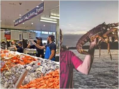 抱歉一天4餐都吃龍蝦!澳洲小鎮「下網必豐收」:拜託觀光客來撈