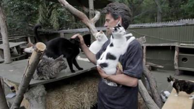 痛失愛子走不出…他年燒300萬打造貓天堂 庇護300老病浪浪