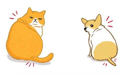毛孩過胖了? 「2大部位」肥肉完全藏不住!該減肥啦