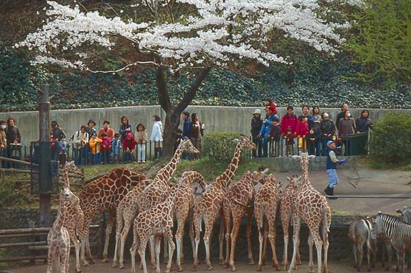 東京 動物園