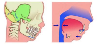 低頭族常縮下巴!傷頸椎、牙齒咬合 定期做2組舒緩姿勢