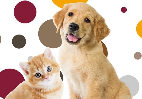 「寵物用品」的圖片搜尋結果