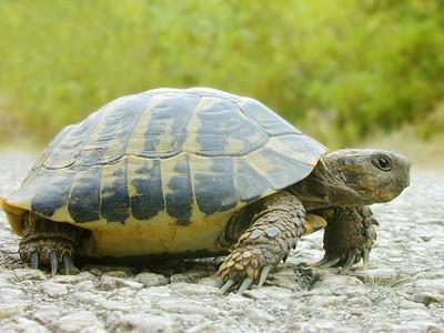 烏龜會自慰!自然界10個冷知識,九公斤茄子的尼古丁等於一支菸