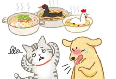 貓狗能吃薑母鴨、麻油雞嗎? 毛孩冬季進補「3大危機」
