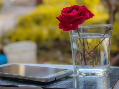 情人節沒對象又怎樣!自製2018桃花培養皿 快把玻璃杯拿出來擺