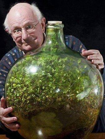最小生態系!1972年封存至今 瓶中綠地仍生意盎然