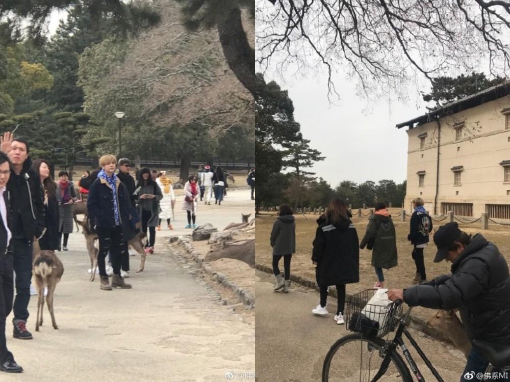 ▲▼鹿晗現身奈良公園。(圖/翻攝自微博)