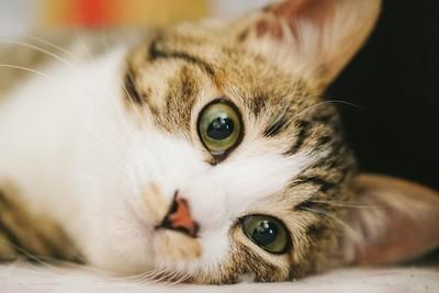 孩子過敏!中醫:貓會吸人靈魂,別養了