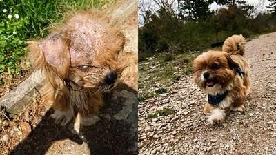 見人就咆哮!獨眼犬被視為惡魔 復原後模樣證明牠只是需要愛
