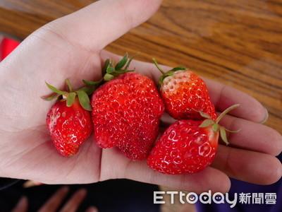 草莓多農藥「常吃如慢性自殺」 醫打臉:洗對方法就好