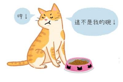 換新碗...喵主子就不吃飯? 貓咪「認碗行為」大解析!