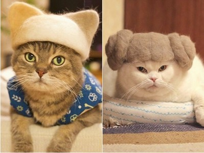 網友超創意製作可愛「貓毛氈帽」