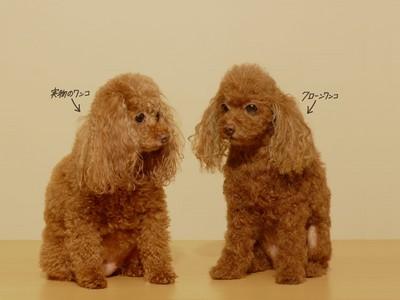 一隻100萬「人工複製狗」!每根毛完整植入,手藝帶回毛孩無價