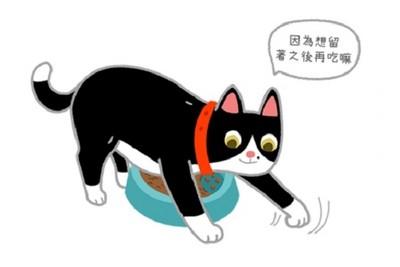 貓咪埋食物=嫌棄伙食不好? 「背後超Q原因」曝光啦!